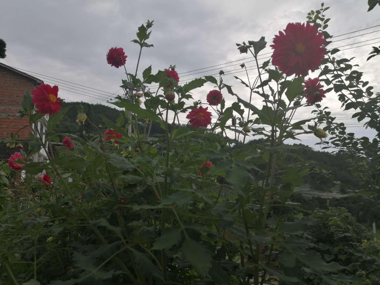 红艳艳的花