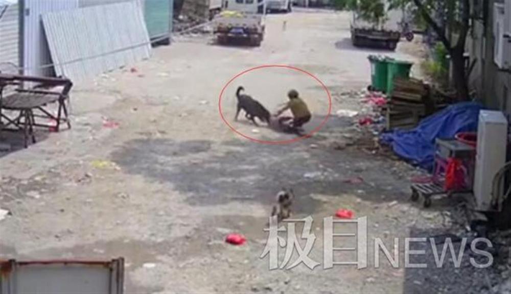 """""""漳州恶犬咬死老人""""家属发声:很气愤狗还活着,未同意十多万元赔偿"""